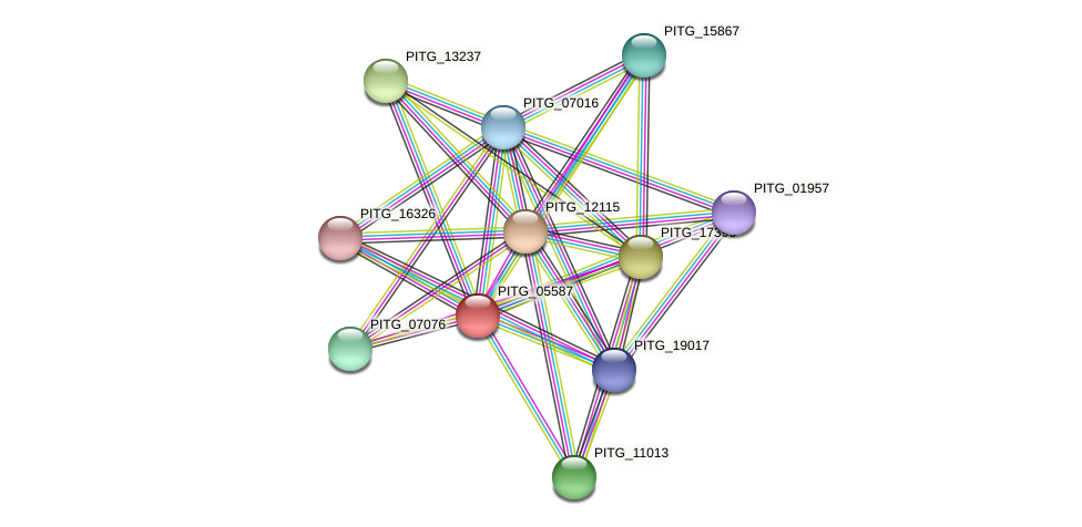 PITG_05587 protein (Phytophthora infestans) - STRING interaction network