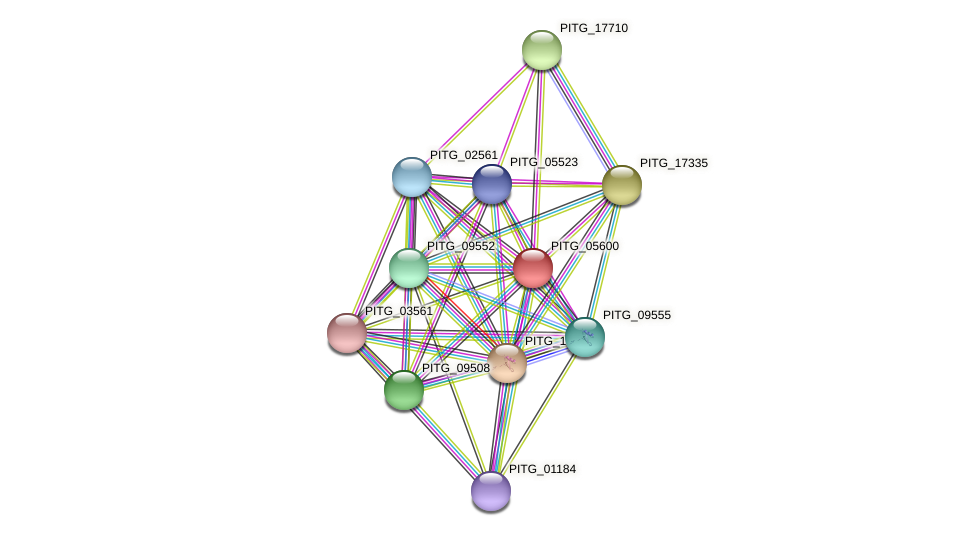 PITG_05600 protein (Phytophthora infestans) - STRING interaction network