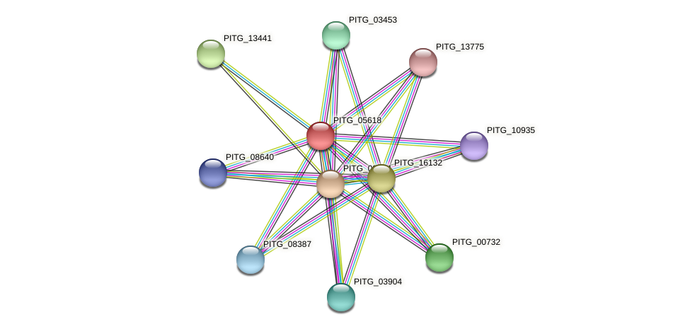 PITG_05618 protein (Phytophthora infestans) - STRING interaction network