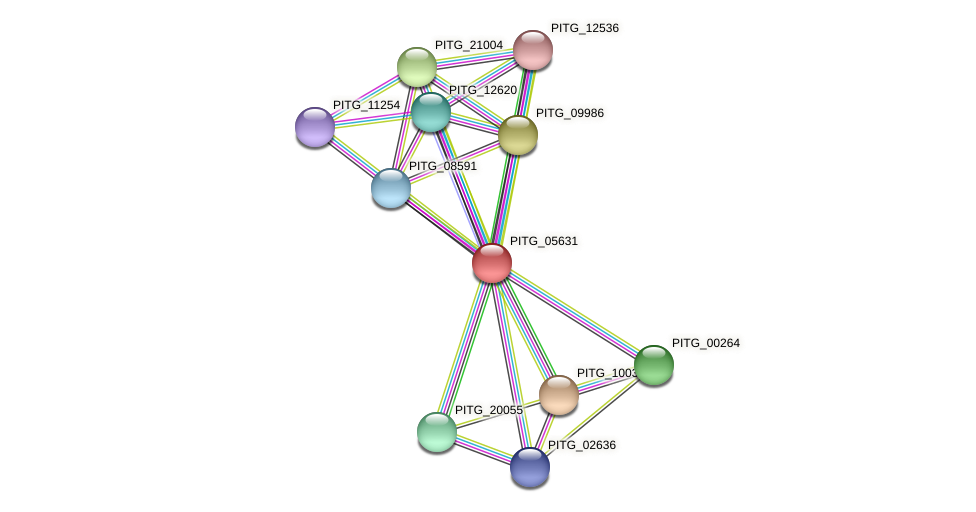 PITG_05631 protein (Phytophthora infestans) - STRING interaction network