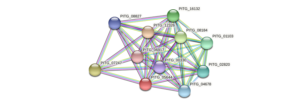 PITG_05644 protein (Phytophthora infestans) - STRING interaction network