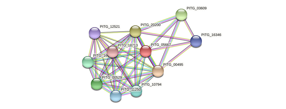 PITG_05667 protein (Phytophthora infestans) - STRING interaction network