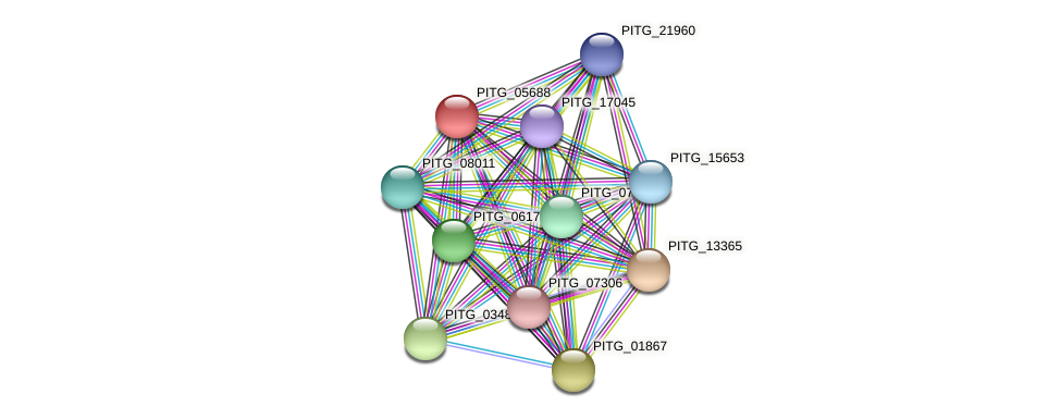 PITG_05688 protein (Phytophthora infestans) - STRING interaction network