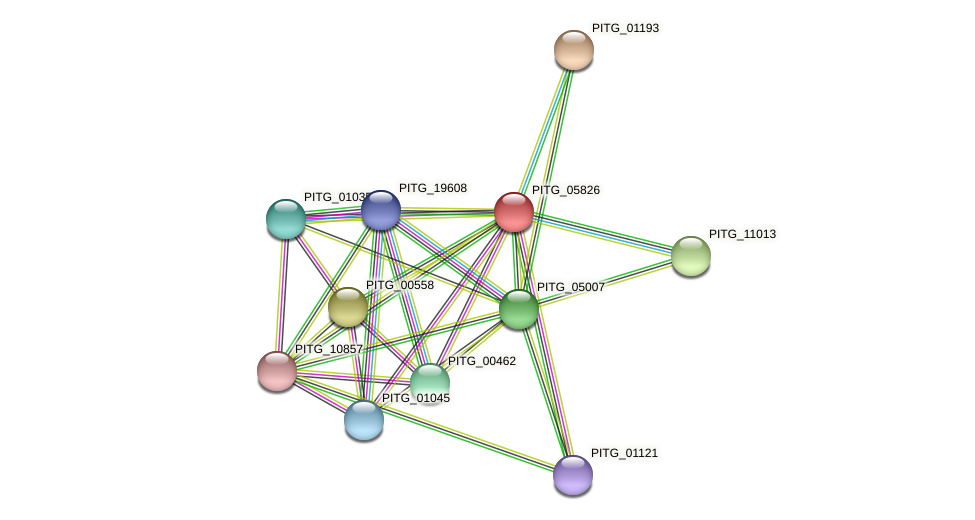 PITG_05826 protein (Phytophthora infestans) - STRING interaction network
