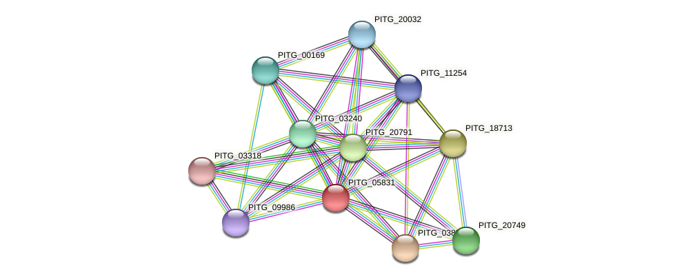 PITG_05831 protein (Phytophthora infestans) - STRING interaction network