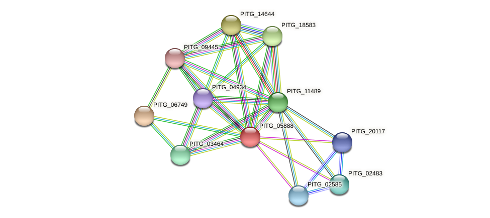 PITG_05888 protein (Phytophthora infestans) - STRING interaction network