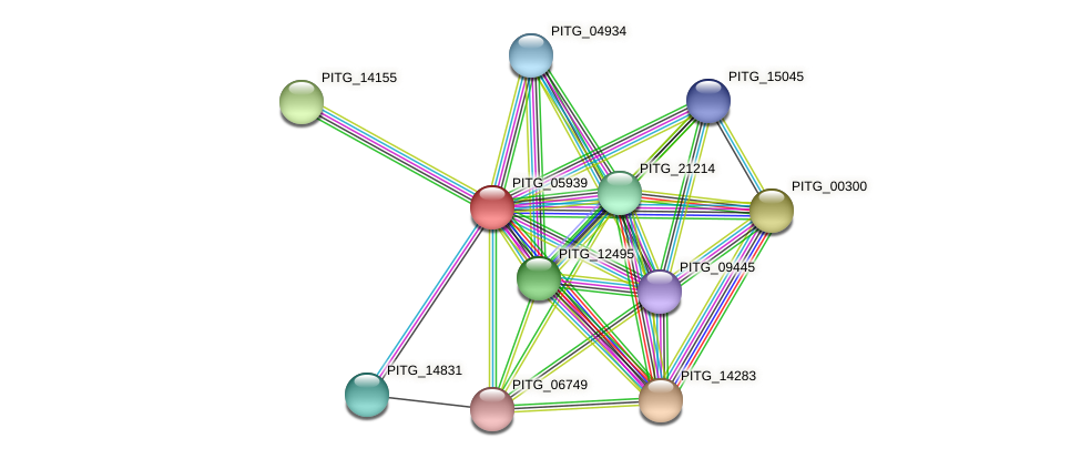 PITG_05939 protein (Phytophthora infestans) - STRING interaction network