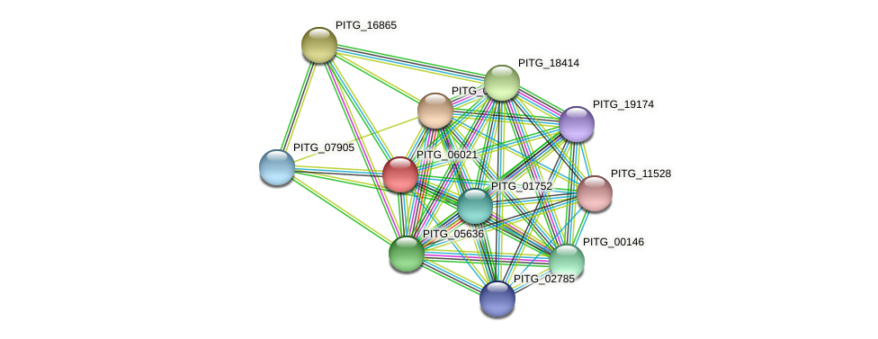 PITG_06021 protein (Phytophthora infestans) - STRING interaction network