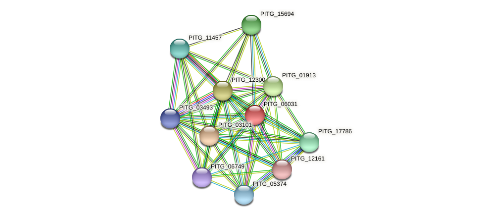 PITG_06031 protein (Phytophthora infestans) - STRING interaction network