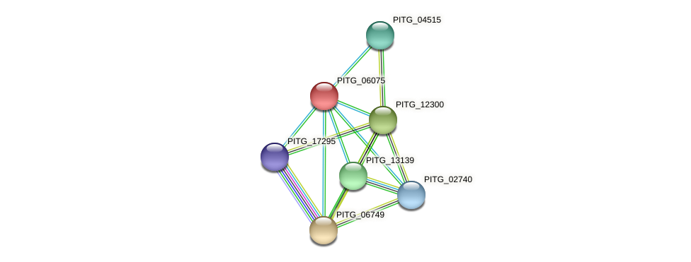 PITG_06075 protein (Phytophthora infestans) - STRING interaction network