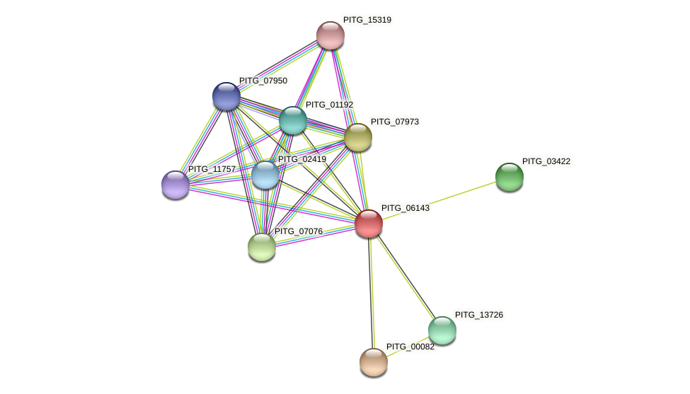 PITG_06143 protein (Phytophthora infestans) - STRING interaction network