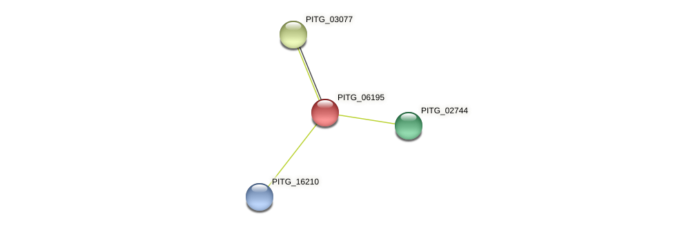 PITG_06195 protein (Phytophthora infestans) - STRING interaction network