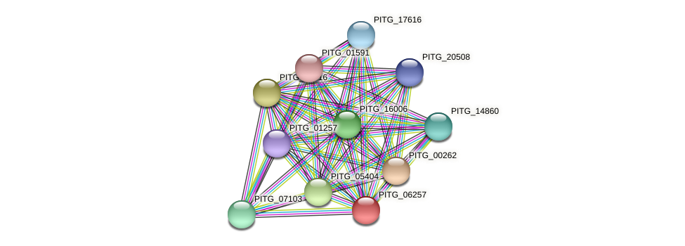 PITG_06257 protein (Phytophthora infestans) - STRING interaction network