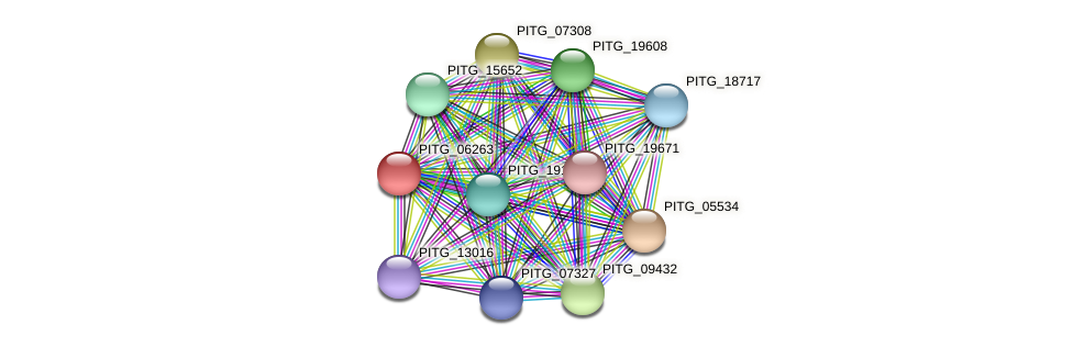 PITG_06263 protein (Phytophthora infestans) - STRING interaction network