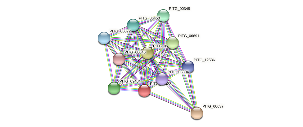 PITG_06322 protein (Phytophthora infestans) - STRING interaction network