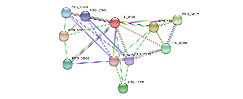 PITG_06380 protein (Phytophthora infestans) - STRING interaction network