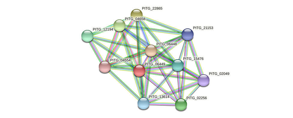 PITG_06449 protein (Phytophthora infestans) - STRING interaction network