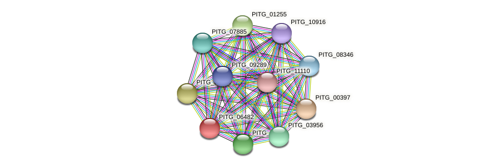 PITG_06482 protein (Phytophthora infestans) - STRING interaction network