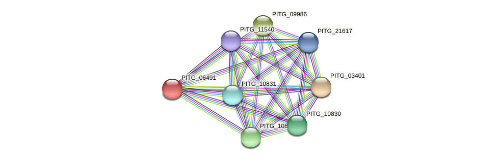 PITG_06491 protein (Phytophthora infestans) - STRING interaction network