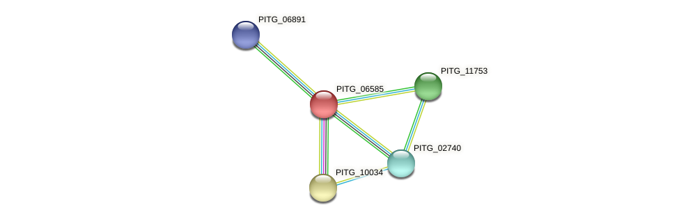 PITG_06585 protein (Phytophthora infestans) - STRING interaction network