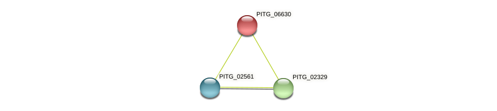 PITG_06630 protein (Phytophthora infestans) - STRING interaction network