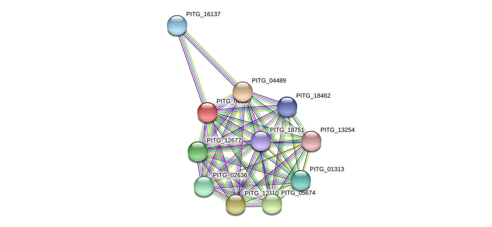 PITG_06660 protein (Phytophthora infestans) - STRING interaction network