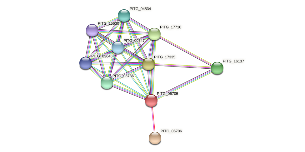 PITG_06705 protein (Phytophthora infestans) - STRING interaction network