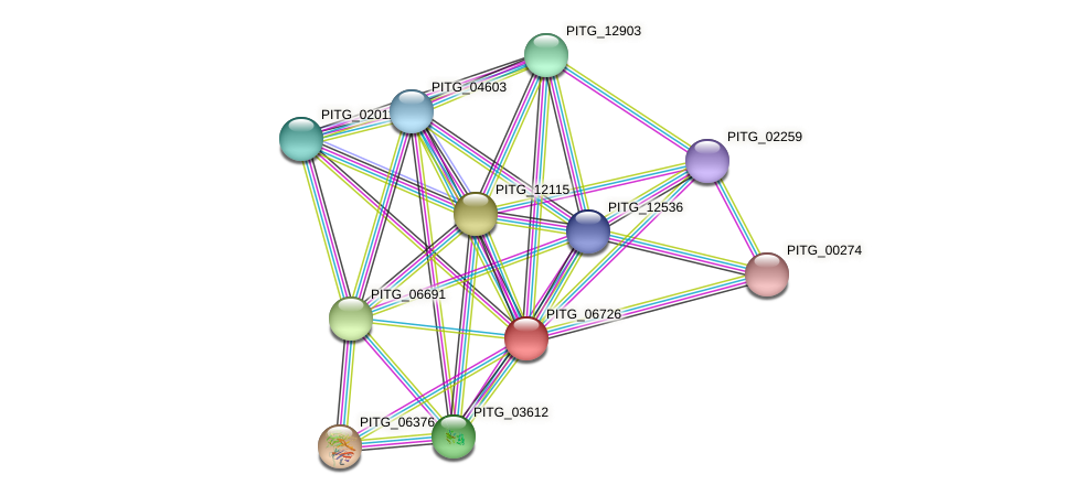 PITG_06726 protein (Phytophthora infestans) - STRING interaction network