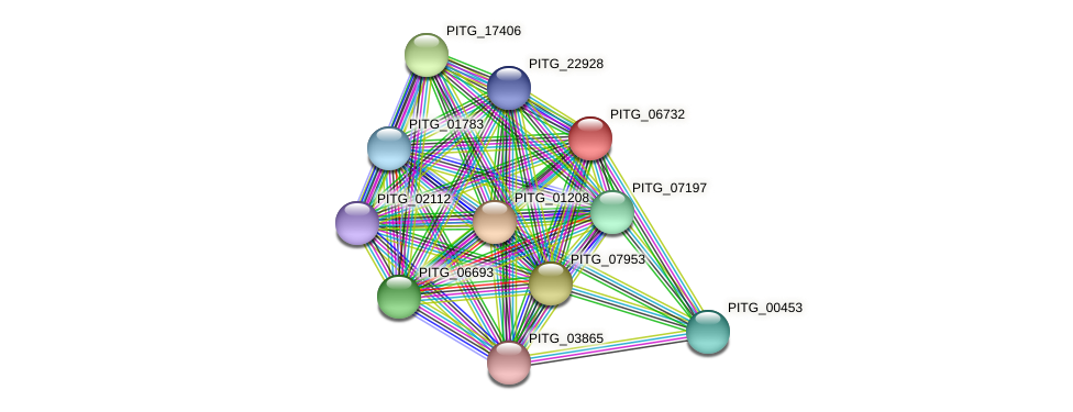 PITG_06732 protein (Phytophthora infestans) - STRING interaction network