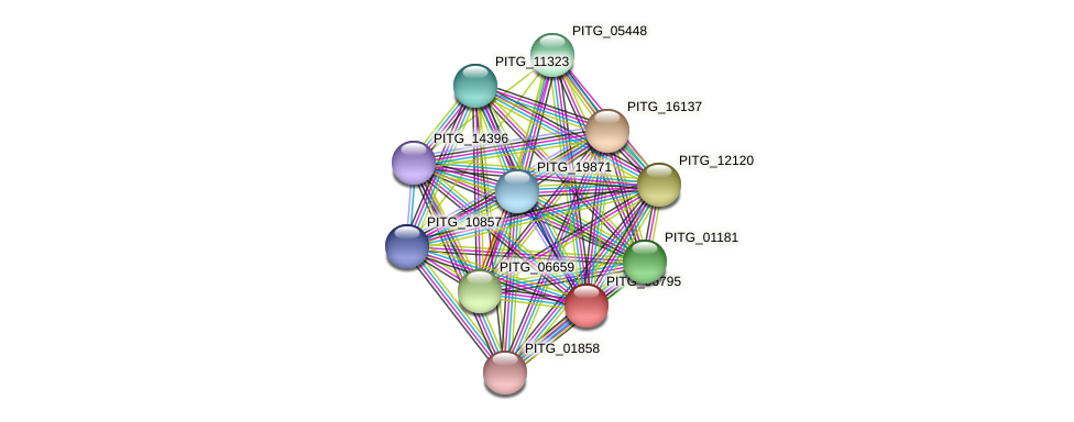 PITG_06795 protein (Phytophthora infestans) - STRING interaction network