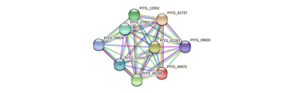 PITG_06872 protein (Phytophthora infestans) - STRING interaction network