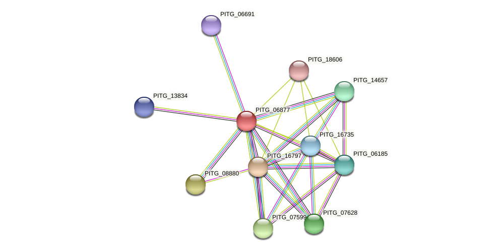 PITG_06877 protein (Phytophthora infestans) - STRING interaction network