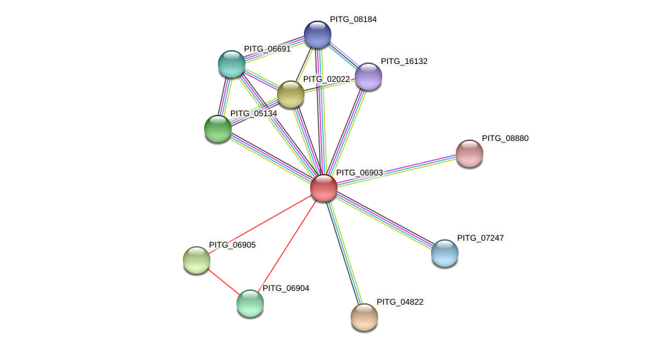 PITG_06903 protein (Phytophthora infestans) - STRING interaction network