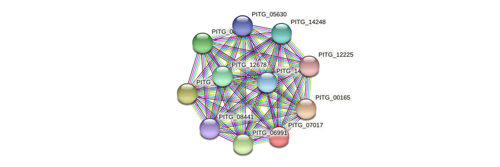 PITG_07017 protein (Phytophthora infestans) - STRING interaction network