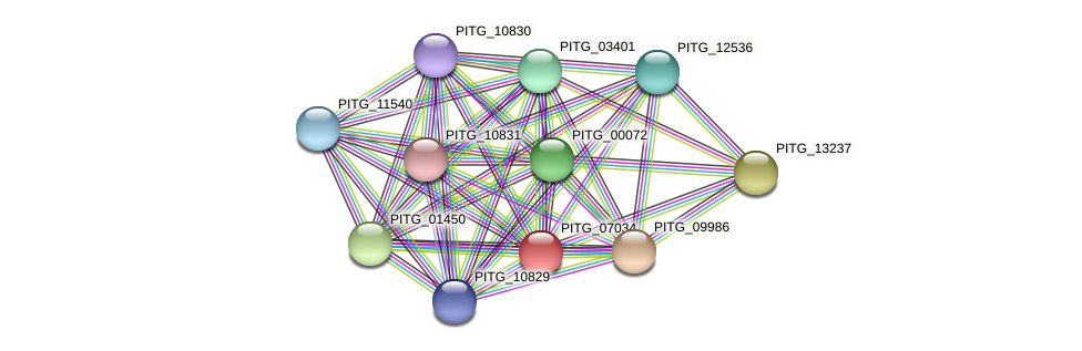PITG_07034 protein (Phytophthora infestans) - STRING interaction network