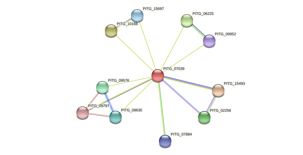 PITG_07039 protein (Phytophthora infestans) - STRING interaction network