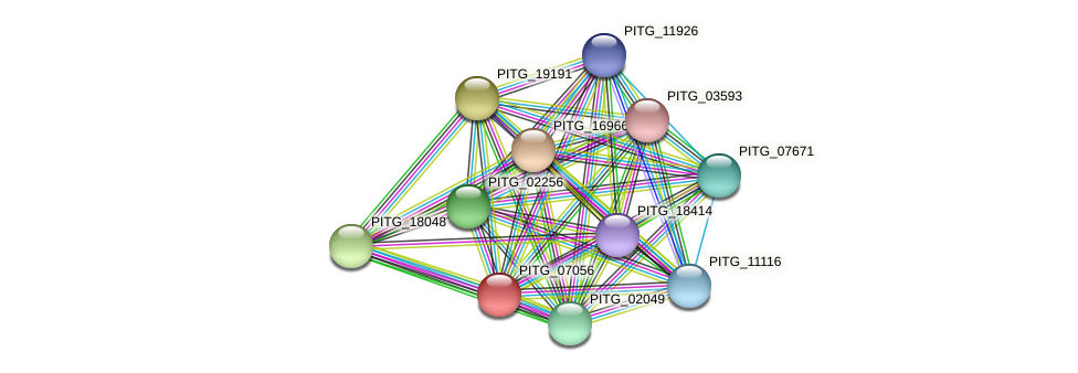 PITG_07056 protein (Phytophthora infestans) - STRING interaction network