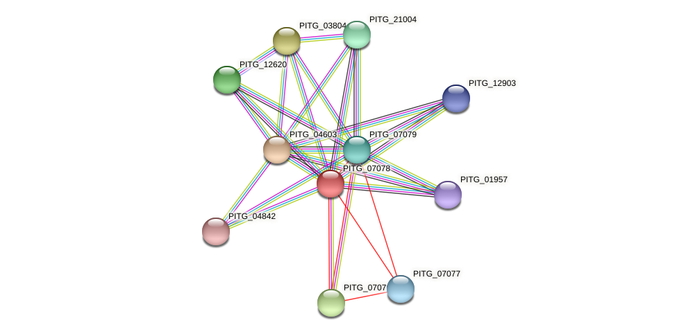 PITG_07078 protein (Phytophthora infestans) - STRING interaction network