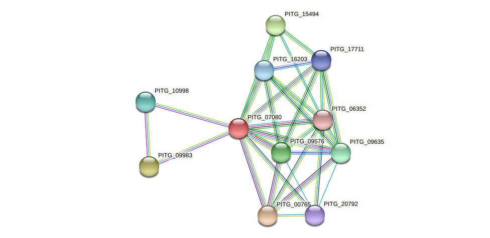 PITG_07080 protein (Phytophthora infestans) - STRING interaction network