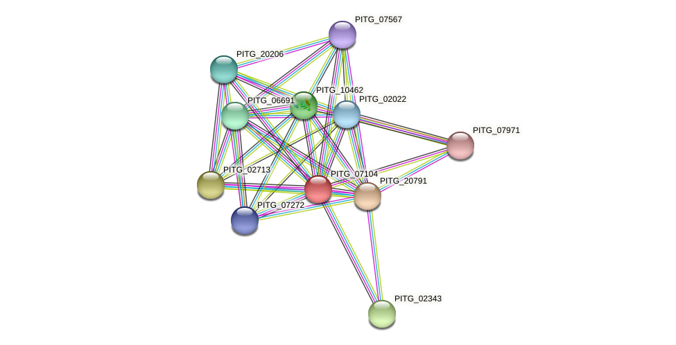 PITG_07104 protein (Phytophthora infestans) - STRING interaction network