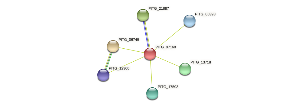 PITG_07168 protein (Phytophthora infestans) - STRING interaction network
