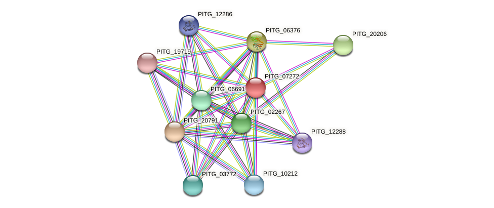 PITG_07272 protein (Phytophthora infestans) - STRING interaction network