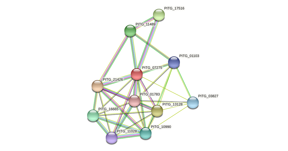 PITG_07275 protein (Phytophthora infestans) - STRING interaction network