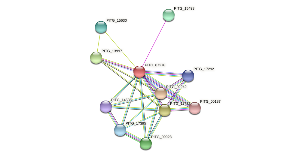 PITG_07278 protein (Phytophthora infestans) - STRING interaction network