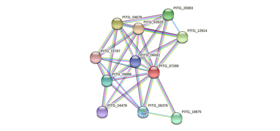 PITG_07289 protein (Phytophthora infestans) - STRING interaction network