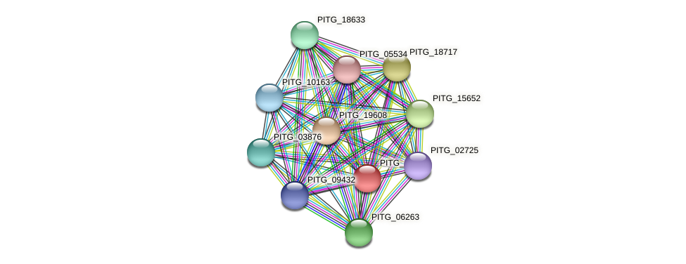 PITG_07327 protein (Phytophthora infestans) - STRING interaction network