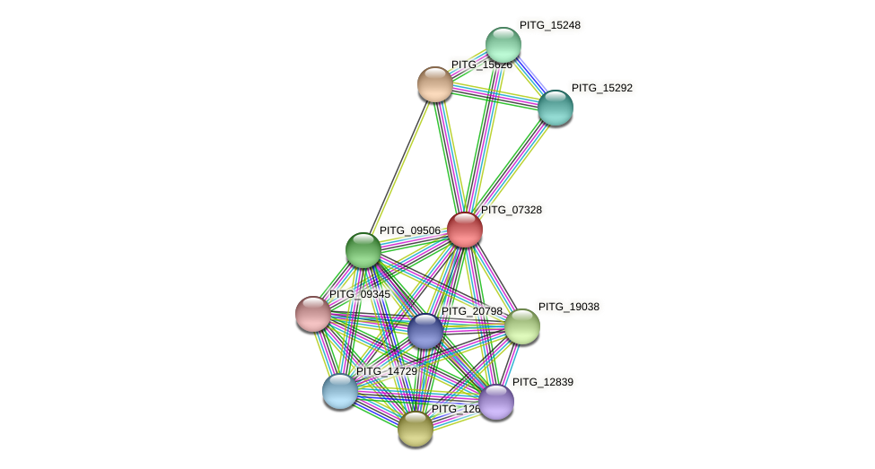 PITG_07328 protein (Phytophthora infestans) - STRING interaction network