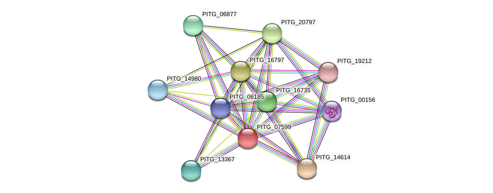 PITG_07599 protein (Phytophthora infestans) - STRING interaction network