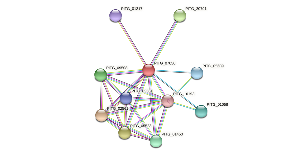 PITG_07656 protein (Phytophthora infestans) - STRING interaction network