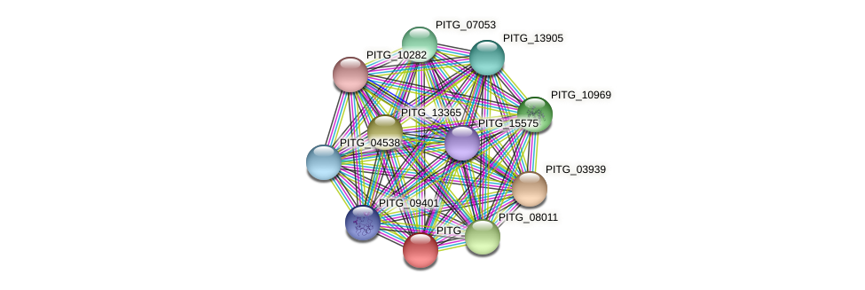 PITG_07775 protein (Phytophthora infestans) - STRING interaction network